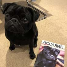 Ralph the pug with Acquire magazine